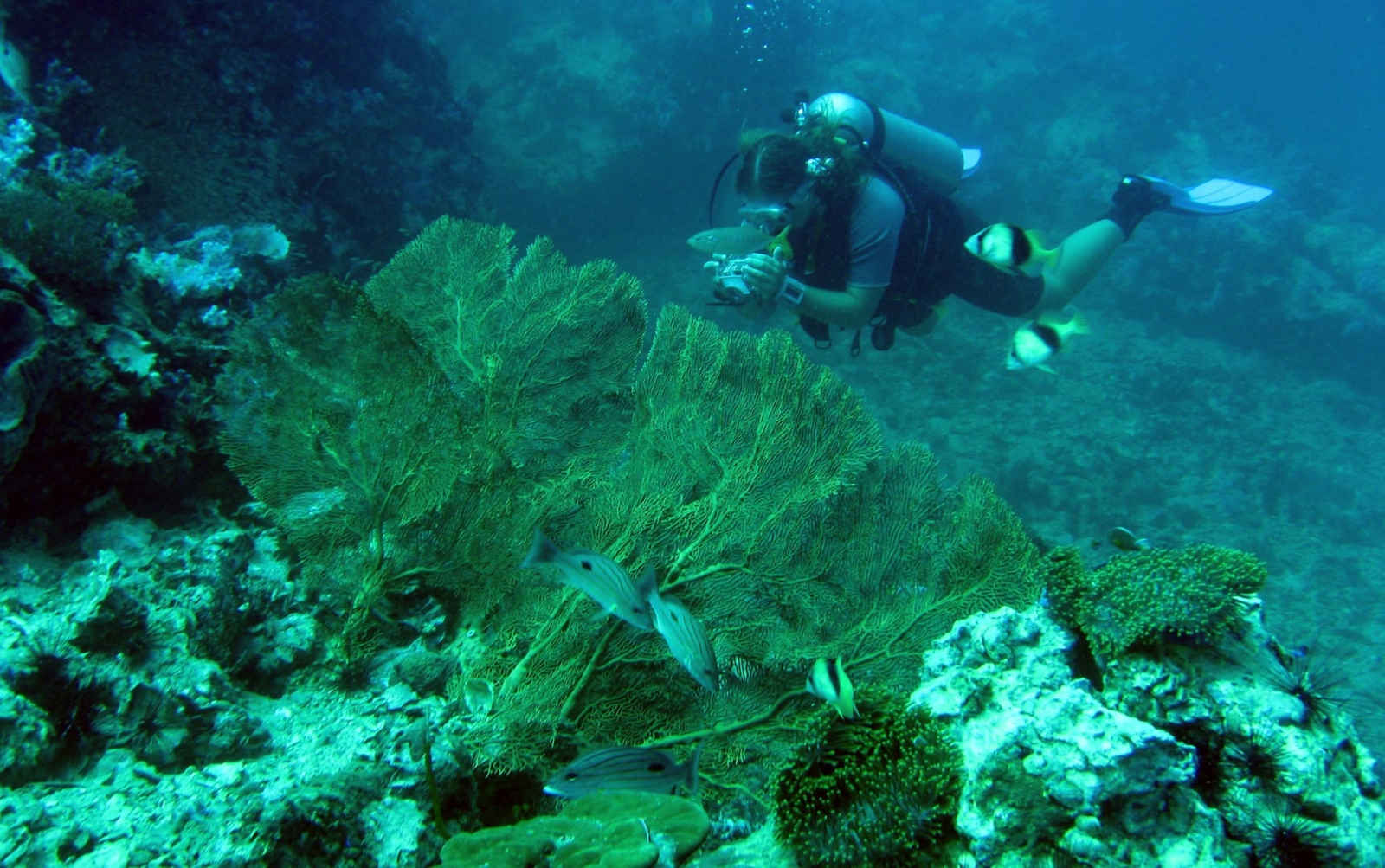 A Projects Abroad volunteer collects data on a Diving and Marine Conservation volunteering project.